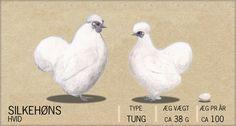 Silkehøns - Chicken breeds of the World