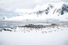 Tausende Pinguine in der Antarktis versammeln sich auf der Insel zum brüten! <3 Alle Reisetipps zu einer Reise an die Antarktis findet ihr auf www.lilies-diary.com #antarctica #antarktis #pinguine #ice #winter #eisberge #iceberg
