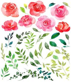 Draw Roses Watercolor Flower Clipart 41 Purple, Red Pink Roses Flowers Leaves Aquarelle Digital Clip Art Waterc - Watercolor floral hand drawn clipart with flowers, leaves Easy Watercolor, Watercolor Flowers, Art Watercolour, Blue Lotus Flower, Red And Pink Roses, Drawing Clipart, Bird Artwork, Plant Drawing, Flower Clipart