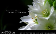 """#2 WINGS OF LIFE GARDENING TIPS: """"Wings of Life"""" – a stunning adventure full of intrigue, drama and mesmerizing beauty. Narrated by Meryl Streep, this intimate and unprecedented look at butterflies, hummingbirds, bees, bats and flowers is a celebration of life, as a third of the world's food supply depends on these incredible – and increasingly threatened – creatures."""