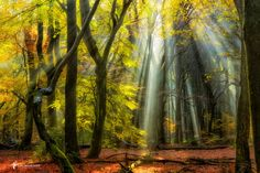 "Magic Woods #3 - <a href=""http://larsvandegoor.com/"">WEBSITE</a> <a href=""https://instagram.com/larsvandegoor/"">Follow me on Instagram</a>"