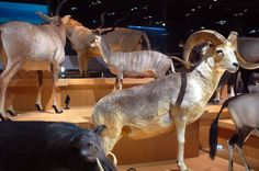 National Museum of Nature and Science - Where In Tokyo listing