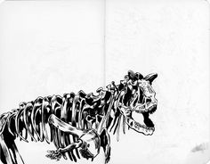 Anna Lubinski - Illustration - Croquis au Muséum national d'Histoire naturelle à Paris. Squelette de dinosaure.