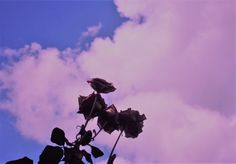 Gmail, Photos, Pictures, Clouds, Pink, Outdoor, Instagram, Art, Outdoors