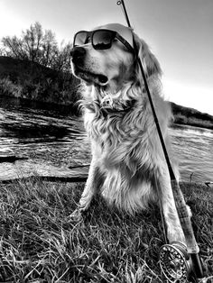 No better way to spend the day than with a dog, a river and a rod! Thank you to @iamnatehearmeroar for Exploring with Westwood!! #sunglasses #mensunglasses #womensunglasses #polarizedsunglasses #fashion