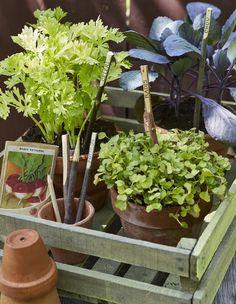 Fabriquer des étiquettes de jardin avec des branches - Marie Claire Jardin Des Tuileries, Branches, Diy, Garden, Modern, Wood Gardens, Backyard Farming, Make Labels, Natural Garden