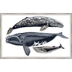 Ashton Wall Décor LLC Coastal 'Whale Display IV' Framed Painting Print & Reviews | Wayfair