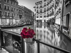 cute color splash photography - Google Search