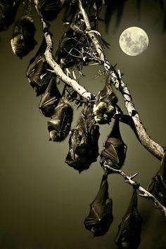 I love this spooky pic - Bats