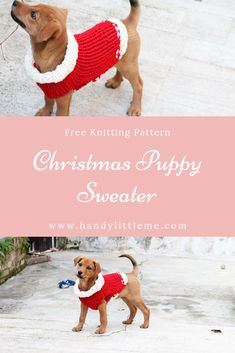 Christmas puppy sweater knitting pattern by Handy Little Me. Make your puppy a cute sweater for the holidays with this free pattern. Christmas Knitting Patterns, Sweater Knitting Patterns, Free Knitting, Simple Knitting, Crocheting Patterns, Lion Brand Hometown Usa, Dog Sweater Pattern, Dog Jumpers, Cute Little Puppies