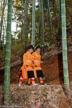 Among The Bamboo . Guizhou China