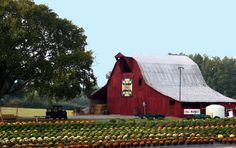 Welcome to Grandaddy's Farm in Middle Tennessee, Pumpkin Patch, Corn Maze, Hayrides, Animal Barn