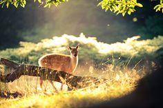 another stunning deer shot by Andrew Evans