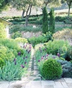 Prostrate rosemary, euphorbias, iris, boxwood, cypress