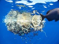 Newly Discovered 'Plastic Island' Shows Global Epidemic Wors. - News Network ~ 'Even if everyone stopped putting garbage in the ocean today, giant garbage patches would continue to grow for hundreds of years. Garbage In The Ocean, Great Pacific Garbage Patch, Animal Crafts For Kids, Animals For Kids, Animal Sketches, Animal Drawings, Marine Debris, Plastic Pollution, Network For Good