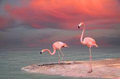 Expression Fiber Arts, Inc. - Kit 2 - June 2016 Insider's Yarn Club - MOODY FLAMINGO, $45.76 (http://www.expressionfiberarts.com/products/kit-2-june-2016-insiders-yarn-club-moody-flamingo.html)