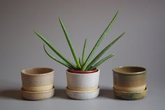 Ceramic planter by Melbourne makers Wingnut & Co. Comes with mathcing saucer. M 100mm h x 115mm w