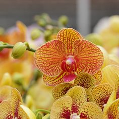 Orchid Bloom Loss: What's Normal & What's Not?