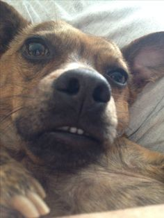 My dog, Grady