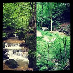 How magical can a forest be? ¿Cuán mágico puede ser un bosque?  www.jessicajlockhart.com.  #humanología #humanology #jessicajlockhart #coachingenoptimismo #optimismcoaching