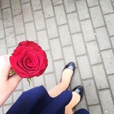 Z poloneza  • • #róża