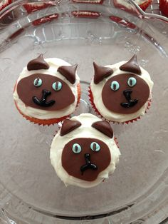 Siamese Cat Cupcakes! I melted chocolate on waxed paper for the faces and used kisses for the ears. They are nearly too cute to eat!
