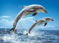 delfíni při západu slunce - Hledat Googlem