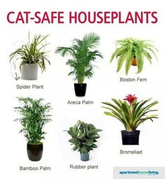 29 cat-safe plants for your home and those to avoid at all cat-safe plants for your home and those to avoid at all types of succulents that work well indoorsCats with Brain Freeze Cat Safe Plants, Cat Plants, Inside Plants, Houseplants Safe For Cats, Plants Toxic To Cats, Poisonous Plants, Plants That Repel Bugs, Cat Friendly Plants, Cat Friendly Home