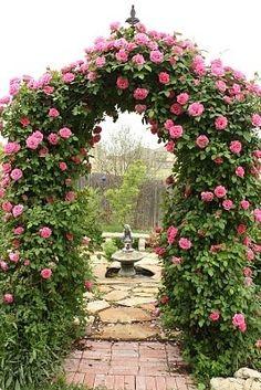 Looks like Zephirine Drouhin. Great garden entrance. www.heirloomroses.com