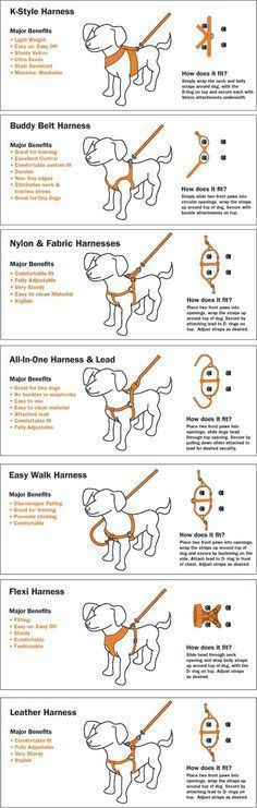Here are 30 of the best charts we have gathered for dog owners. Great information from dog training, to dog care. Everything you ever wanted to know about your dog can be found in this collection of charts.