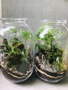 Mini Terrarium, How To Make Terrariums, Terrarium Plants, Eco Garden, Moss Garden, Indoor Garden, Unique Plants, Cool Plants, Plant In Glass