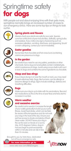 Vets Now Springtime Safety For Dogs Infographic #seasonalsafety #dogs #doghealth #petadvice #veterinarians VetsNow is in UK https://www.vets-now.com/pet-owners/pet-care-advice/infographics/infographic-springtime-safety-for-dogs/