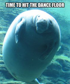 Bad Day? Calming Manatee Is Your New Fave - Babble