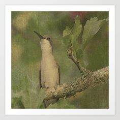 Hummingbird  Art Print by Angie Johnson - $17.99