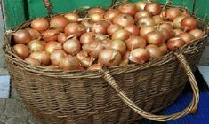Summer House Garden, Home And Garden, Grape Vineyard, Farm Gardens, Fresh Fruit, Homesteading, Onion, Garden Design, Food And Drink