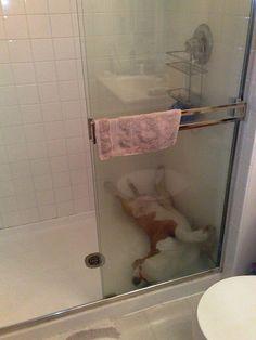 27 Hilarious Photos That Prove English Bulldogs Can Sleep Absolutely ANYWHERE BowWow Times Shower bath