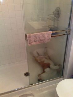 27 Hilarious Photos That Prove English Bulldogs Can Sleep Absolutely ANYWHERE BowWow Times Shower bath