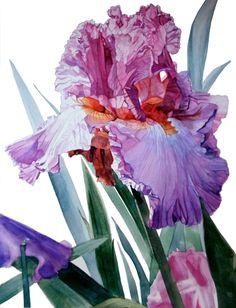 """Iris Luciano Pavarotti"" from the gorgeous portfolio of watercolors by Greta Corens, featured on www.ArtsyShark.com"