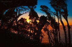 Siluetas de gigantes al atardecer ✨🍃🖤 . . . . . #conservatuscolores📷 #nature #forest #instachile #love #atardecer #chile🇨🇱 #lovenature…
