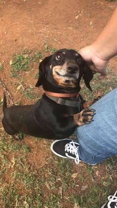 I miss my little hound!
