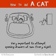 How To Be A Cat, The Ultimate Illustrated Guide http://www.gossipness.com/funny/how-to-be-a-cat-the-ultimate-illustrated-guide-2120.html