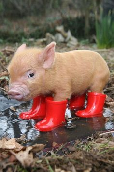 Red wellies on a rainy day.