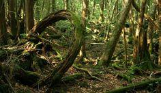 Aokigahara – La foresta dei suicidi: uno dei 10 luoghi più spaventosi al mondo