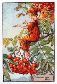 Mountain Ash Flower Fairy Vintage Print, Cicely Mary Barker – The Flower Fairy Shop