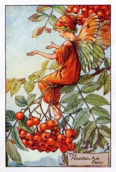 The Mountain Ash Fairy by Cicely Mary Barker