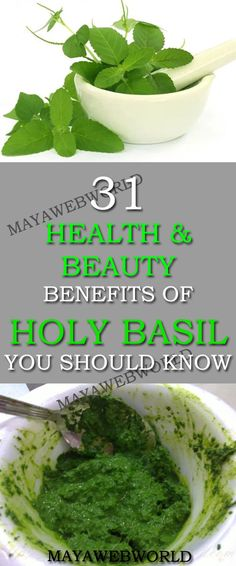 31 Health And Beauty Benefits Of Holy Basil You Should Know – MayaWebWorld