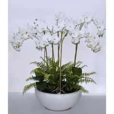 "31.5"" WHITE PHALAENOPSIS IN WIDE POT Honeymoon Suite, Accounting, Plants, Plant, Planets"