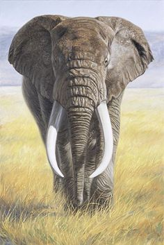 Lucie Bilodeau   OIL Power of Nature  (2002)  Subject: African Elephant Dimensions (inches): 30 x 20 Medium: oil on canvas
