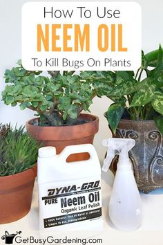 Neem oil is a naturally occurring pesticide found in the seeds of the neem tree. It's a very effective way to get rid of bugs on houseplants or in the garden. Find information about neem, learn how to use neem oil for insect control, and also how to make neem oil spray for plants using my neem oil insecticide recipe. - Green Friends for Our Home  IMAGES, GIF, ANIMATED GIF, WALLPAPER, STICKER FOR WHATSAPP & FACEBOOK