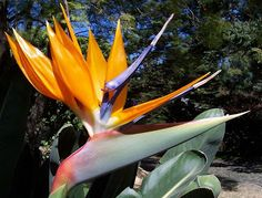 Body Soul and Spirit: Friday Flowers: Bird of Paradise